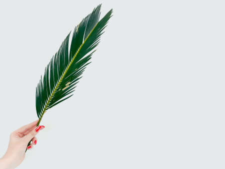 woman hand holding a fern leaf on white background. decorative natural plant. green bracken branch. botany and flora. copyspace concept Stock Photo