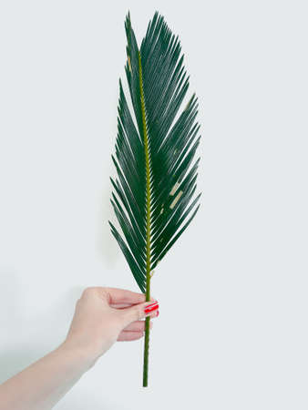 woman hand holding a fern leaf on white background. decorative natural plant. green bracken branch. botany and flora. copy space concept