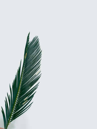 fern leaf on white background. decorative natural plant. green bracken branch. botany and flora. free space concept