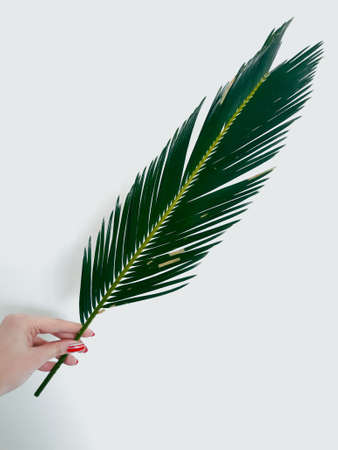 woman hand holding a fern leaf on white background. natural green decor. floristics botany and foliage concept Stock Photo