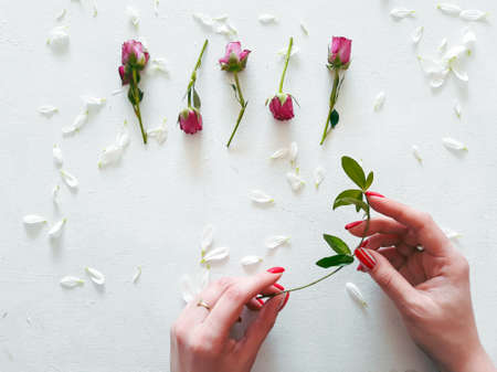 rose buds and camomile petals on white background. beauty of nature and tenderness of flora. woman hands holding a thin twig