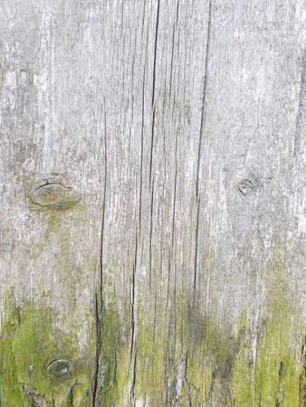 old weathered wood texture background. cracks and green moth. light grey shabby natural backdrop. vintage eroded surface. free space concept Banco de Imagens