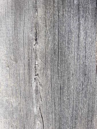 old wood texture background. flaky crackled texture. distressed aged board. cracks light grey shabby natural backdrop. vintage eroded surface. free space concept