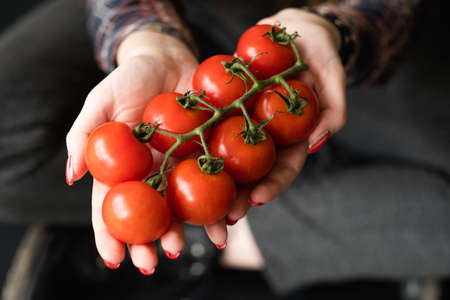natural organic food. farmers market vegetables for healthy eating. woman hands holding red tomatoes 写真素材