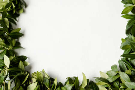 periwinkle leaves wreath on white background. green foliage circle. floristry and plants arrangement design. negative space concept. Reklamní fotografie - 107515546