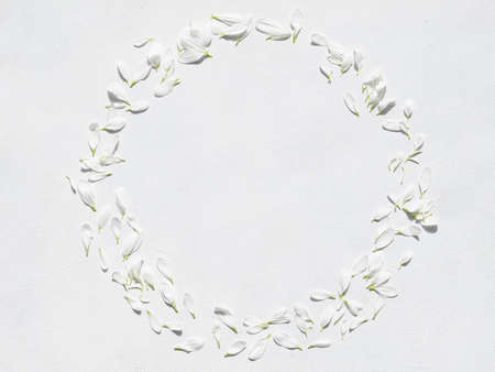 daisy petals wreath on white background. flower decor. tender light fragile nature concept. empty space. Reklamní fotografie