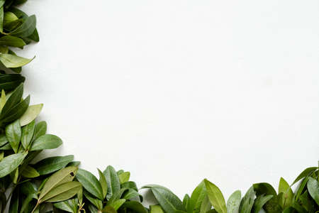 floristry minimalistic art. green periwinkle leaves on white background. nature and plants. copyspace concept Stock Photo