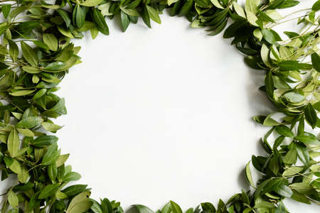 periwinkle leaves wreath on white background. green leafy foliage circle. minimalist floral decor. empty space concept Reklamní fotografie - 107792028