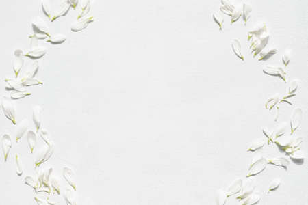 daisy blossom on white background. tender delicate petals in a wreath. botany and nature concept. negative space.