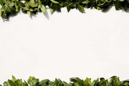periwinkle leaves on white background. green foliage frame. floristry botany and natural decor. free space concept.