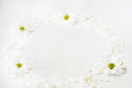 daisy wreath on white background. herbera flowers in a circle. minimalist monochrome natural decor. empty space concept. Reklamní fotografie