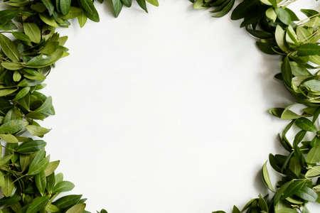 periwinkle leaves wreath on white background. green foliage circle. floristry and plants arrangement design. negative space concept. Reklamní fotografie