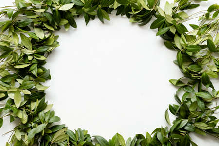 periwinkle leaves wreath on white background. green foliage circle. floristry botany and natural decor. empty space concept.