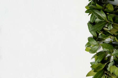 periwinkle leaves on white background. green leafy foliage floral decor. free space concept