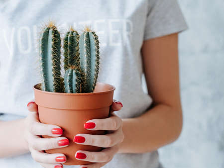 volunteer woman holding flowerpot with green cactus. environment protection and activism.