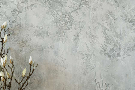 Tender branch breaking into bloom against plain stucco gray wall background. minimal natural decor