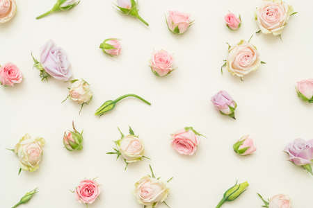 Floral pattern design. Assorted roses on ivory background. Flat lay.
