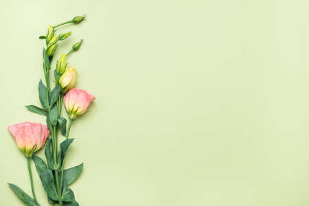 Pink eustoma flower. Minimal floral layout. Copy space on green background. Flat lay.