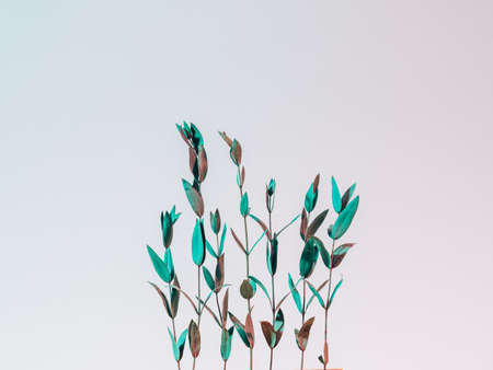 Foliage arrangement. Environment protection concept. Stems row on pink gradient background. 版權商用圖片