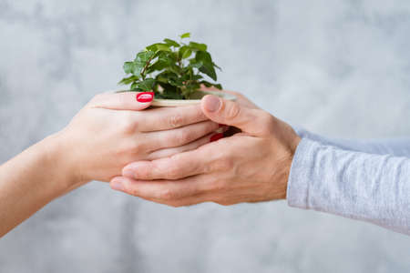 Plant protection concept. Mans and womans hands holding potted houseplant. Stock Photo