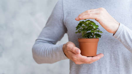 Save world protecting nature. Conceptual composition. Home plant secured in mans hands.