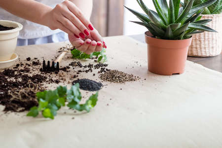 Gardening hobby. Seeds germinating composition. Woman engaged in planting.