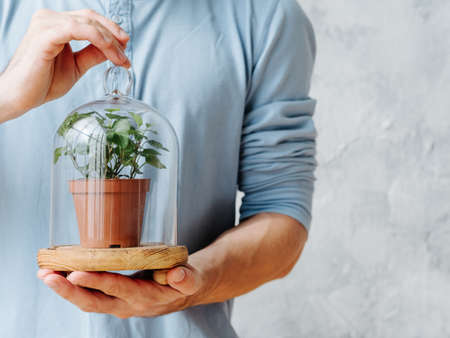 Plant care. Nature protection concept. Man holding houseplant in glass dome. Stock Photo