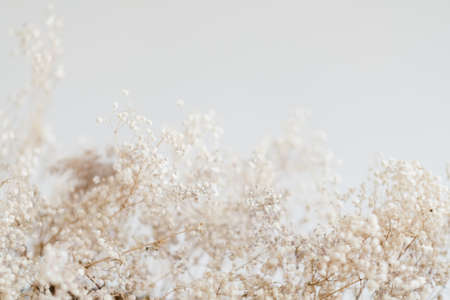 Floral pattern decor. Dried foliage composition. Copy space on ivory background. 版權商用圖片