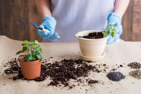 Gardener at work. Indoor gardening hobby. Woman in rubber gloves engaged in replanting hold shovel.