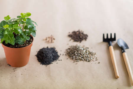 Home gardening concept. Plant transplantation. Houseplant and basic garden tools equipment.