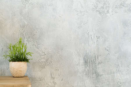 Indoor plant decor. Design concept. Single houseplant on dresser. Copy space on grey textured background.