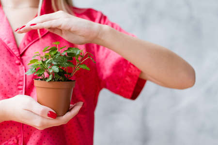 Plant protection concept. Woman covering houseplant with hand.
