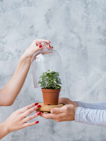 Sustainable development. Nature protection concept. Plant in glass dome supported by mans and womans hands.
