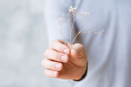 Sustainable development. Nature protection concept. Parched plant in mans hand. Stock Photo