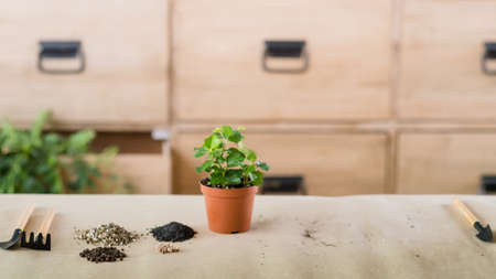Apartment gardening. Potting plants composition. Houseplant with soil and garden tools.