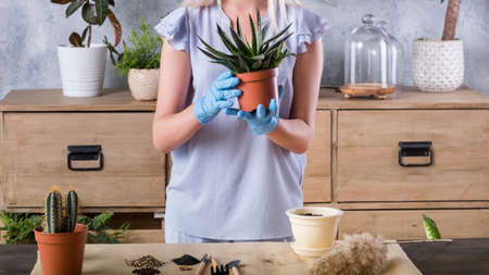 Home gardening concept. Plant transplantation background. Woman with houseplant and garden tools.