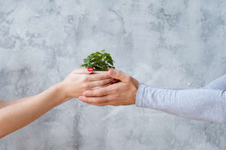 Environment protection. Conceptual ecology movement. Mans and womans hands holding houseplant. Stock Photo