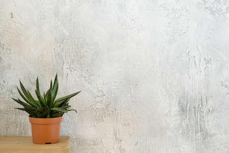 Home plant decor. Modern interior design. Single houseplant on dresser. Copy space on grey textured background.