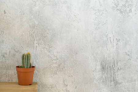 Flora and loft style. Cactus on dresser. Copy space on grey textured background.