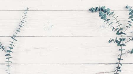 Blumen- und Naturdekorkonzept. Flache Lage des grünen Pflanzenzweigs auf weißem Holzhintergrund. Platz kopieren. Standard-Bild