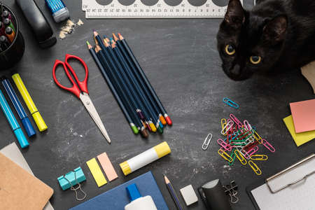 Student home workplace. Top view of school essentials and black cat on chalkboard desk. Stock Photo