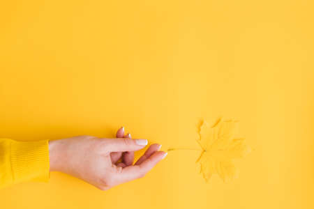 Harvest time. Woman hand reaching after single yellow maple leaf over orange background. Copy space. Stock Photo