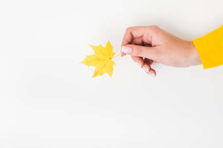 Harvest time. Woman hand holding single yellow maple leaf over white background. Copy space.
