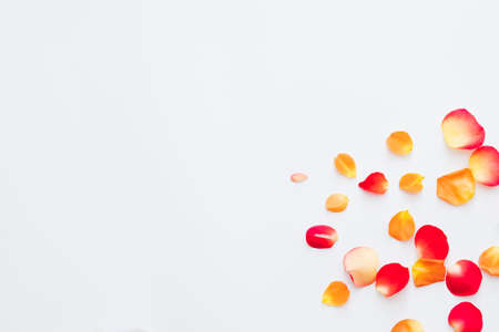 Flower festival. Flat lay of red and orange rose petals scattered over white background. Copy space.