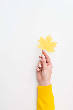 Country fair. Woman hand holding single yellow maple leaf over white background. Copy space.