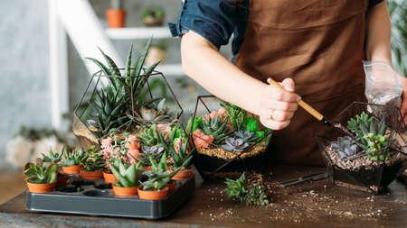 DIY-Florarium. Geschäftsidee der Hausfrau. Abgeschnittene Aufnahme einer Frau, die zu Hause Sukkulenten pflanzt und anbaut.
