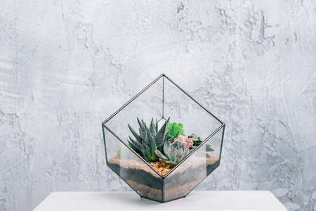 DIY florarium. Natural interior decor. Succulents and moss arrangement in glass geometric vase. Copy space. 스톡 콘텐츠