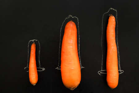 Standard penis größe