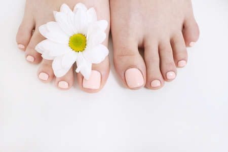 Perfect nude pedicure on white background and spring flower. Female feet top view with free space. Result of spa salon procedure