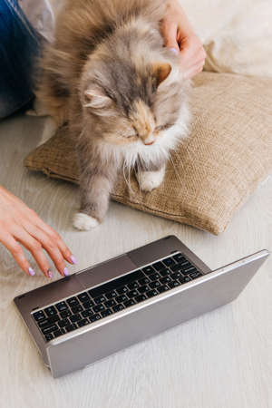 curiously: Fluffy cat curiously looks at laptop sitting near her young owner. Charming family pets and people cosiness concept, interest in new technology of daily life Stock Photo
